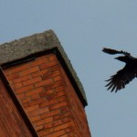 The Crow Tries to Escape -5-1-15