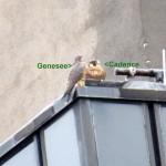 img_0020-genesee-visits-sis