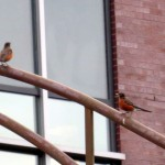 img_0026-robins-below-beauty-and-the-kids-not-happy