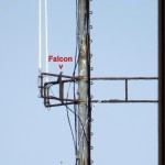 img_0072-falcon-on-fct