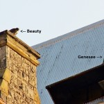 Genesee and Beauty on OCH -7-1-15