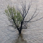 Tree Island Under Water 7-1-15