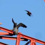 get-lost-falcon