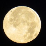 img_0002-blue-moon