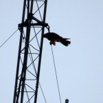 img_0024-high-wire-act