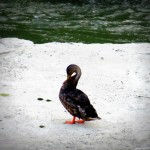 img_0027-duck-all-by-itself