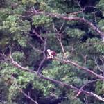 img_0017-osprey
