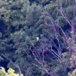 img_0023-2nd-osprey