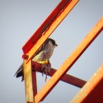 img_0031-dc-with-prey