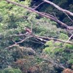 img_0039-osprey