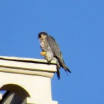 img_0040-half-a-falcon-power-sign