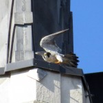img_0057-wing-stretch