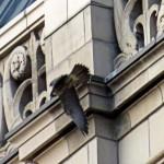 img_0065-big-juvie-wings