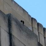 img_0091-squawking