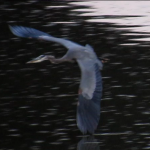 gbh-flying-over-river