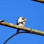 img_0073-falcon-power