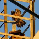 wing-stretch