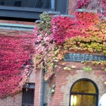 img_0003-fall-in-rochester