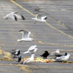 img_0010-its-a-feeding-frenzy