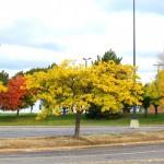 img_0023-trees-at-mc