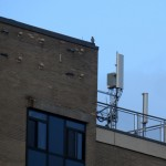 img_0061-billie-on-roof