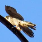 img_0084-he-female-taking-off