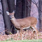 img_0009-river-gorge-behind-this-deer