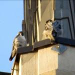 img_0024-love-birds