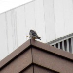 img_0037-falcon-power