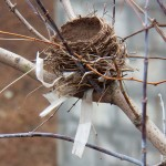 Nest near Genesee River -2-6-16