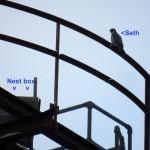 img_0005-roofless-hawkeye-nest-box