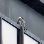 img_0024-beauty-sleeping-head-tucked-in-her-wing