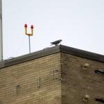 img_0028-billie-on-north-roof-st