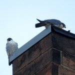 img_0036-dc-watching-sparrows-below