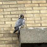 img_0047-watching-sparrows-below