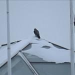 img_0048-mc-falcon