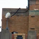Pigott Near Nest Box -4-6-16