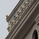 Kestrel on Powers Bldg -6-29-16