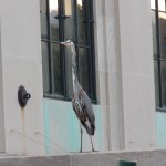 1-gbh-at-library-7-7-16