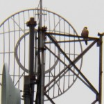 22-leo-on-shoretel-antenna-7-10-16