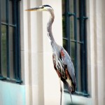 img_0013-gbh-on-rumdell-library-wall