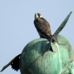 img_0026-juvie-on-mercurys-head