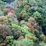 img_0003-seth-green-park