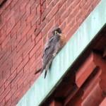 img_0033-watching-a-little-birdie