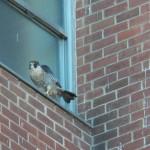 1-bs-falcon-9-28-16