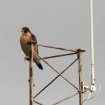 8-genesee-on-shumway-antenna-10-6-16