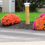 img_0038-mums-the-word