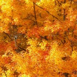 20-fall-leaves-11-6-16