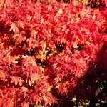 6-fall-leaves-11-5-161