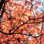 7-fall-leaves-11-5-16
